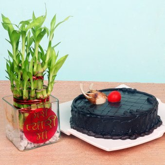 Lucky Bamboo with Chocolate Truffle Cake Combo for Mom