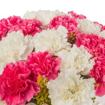 20 Pink and White Carnations Bouquet in Zoomed View