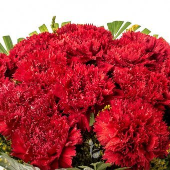 15 Red Carnations Bunch with Zoomed View