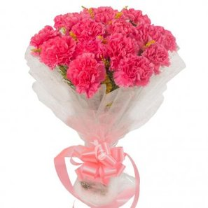 15 Pink carnations with Close View