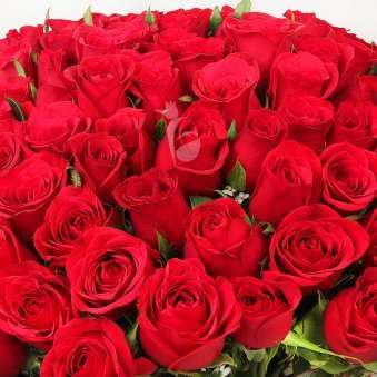 150 Red Roses Bunch with Zoomed View