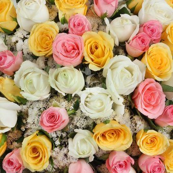 Combination of 30 mixed colored long stemmed roses with Zoomed View