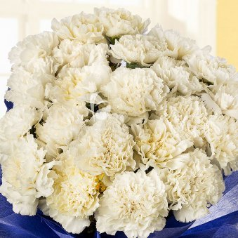 Bunch of 25 White Carnations in Zoomed View