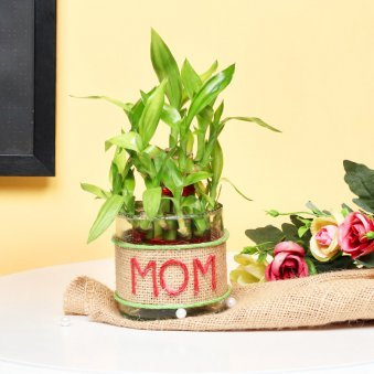 2 Layer Feng Shui Bamboo Plant Gift for Mother