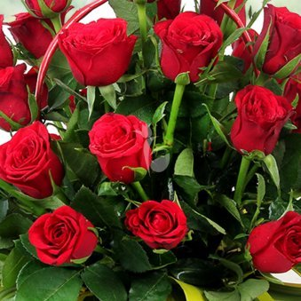 Zoom in view of 40 Red Roses - A gift of Love Sensation