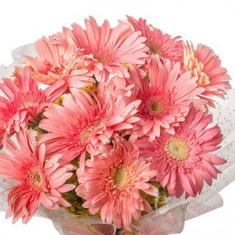 10 Pink Gerberas Bunch in Zoomed in View