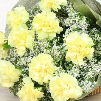 15 Yellow Carnations in Zoomed View