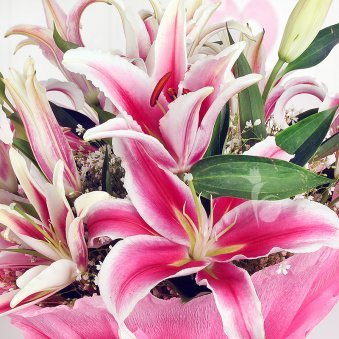 Arrangement of 6 beautiful pink Oriental Lilies with Zoomed View