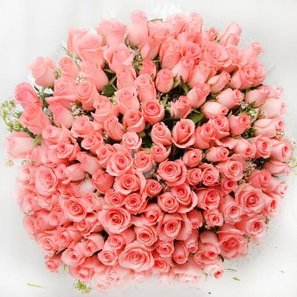 A 150 Pink Roses Bunch in Top View