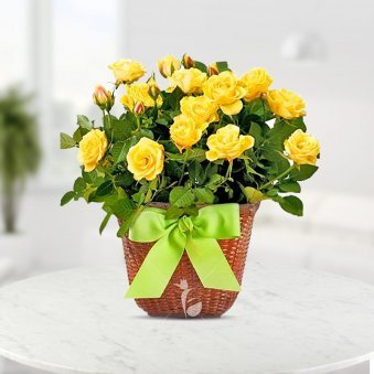 Sunny smiles with roses Basket Of 20 Yellow Rose flowers - for online delivery in Mumbai