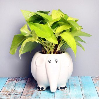 Money Plant in Elephant Vase