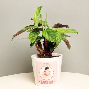 Calathea Plant in Personalised Vase for Mom