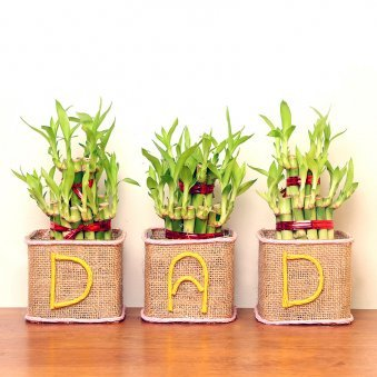 Lucky Bamboo Terrarium Combo for Dad