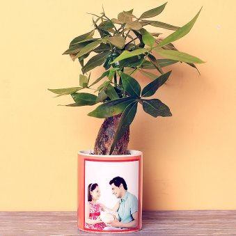 Pachira Bonsai Plant in Personalised Vase for Dad