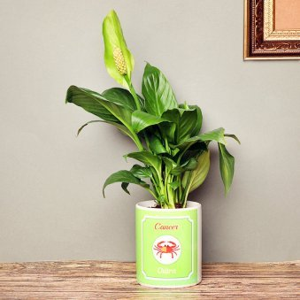 Personalised Peace Lily Plant for Cancerians