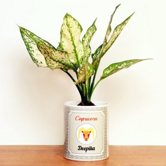 Personalised Aglaonema Plant for Capricorn People