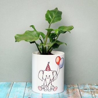 Xanadu Plant in Birthday Mug