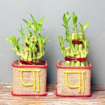 Lucky Bamboo Combo for Dad