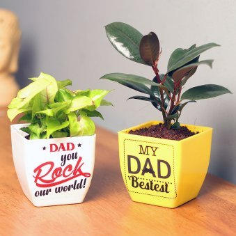 Golden Syngonium Plant for Dad