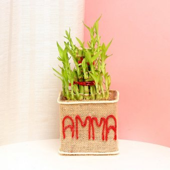 Bamboo in Glass Vase for Mom Wrapped in Jute