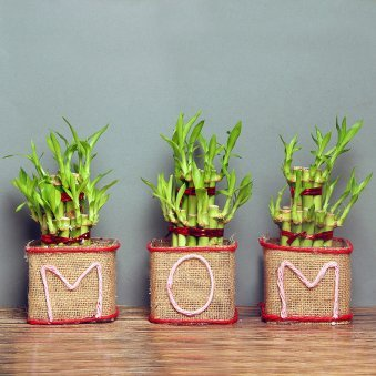 Dignified Bamboo Plant Gift For Mom