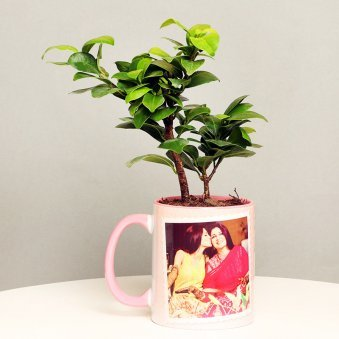 Ficus Compacta Plant in Personalised Mothers Day Mug