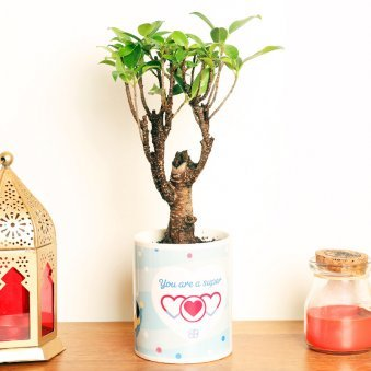 Ficus I Shape Bonsai Plant in a Printed Mug for Mom