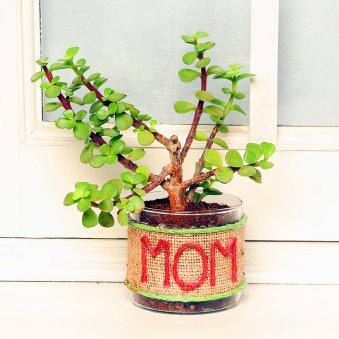 Terrarium Jade Plant - A Mothers Day Special Plant Gift