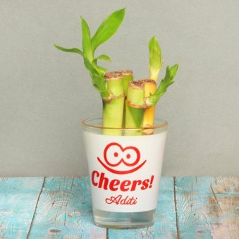 Lucky Bamboo in Personalised Shot Glass