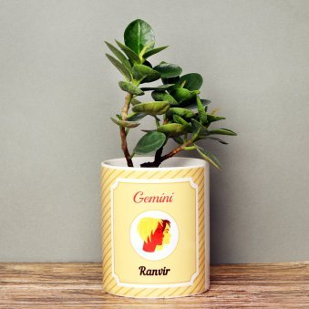 Personalised Ficus Iceland Dwarf Plant for Gemini People