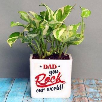 White Pothos Plant in White Vase for Dad