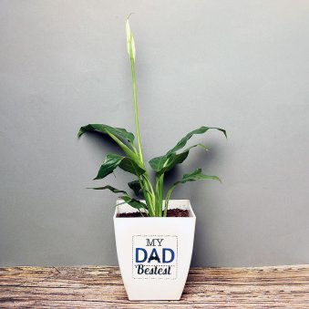 Peace Lily Plant in White Vase for Dad