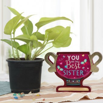 Combo of Golden Pothos and You Are The Best Sister Trophy