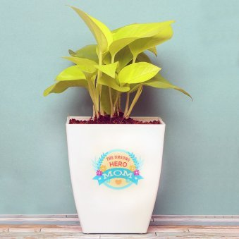Happy Money Plant - A Gift for Mom