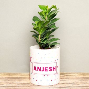 Ficus Compacta Plant in Personalised Birthday Mug