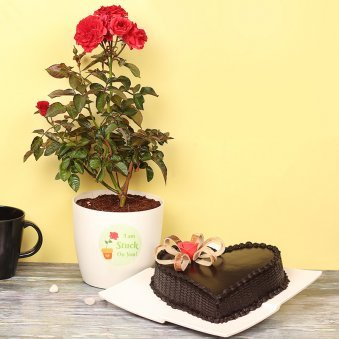 Red Rose Plant with Heart Shaped Chocolate Cake Combo