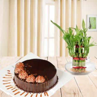 Heavenly Creations Combo - Ferrero rocher cake with lucky bamboo plant