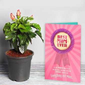 Hibiscus Plant with a Card Combo for Mom