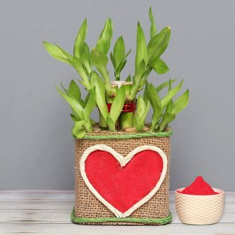 2 Layer Bamboo Plant with Gulal Holi Combo