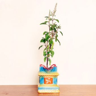 Tulsi Plant in a Swastik Vase