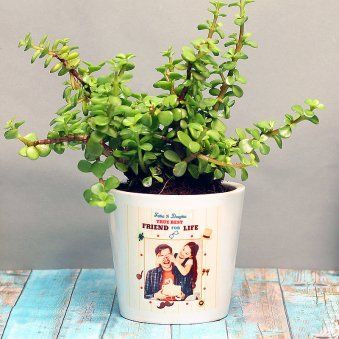 Jade Plant in Personalised Vase for Dad