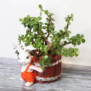 Jade Plant in Rabbit Vase