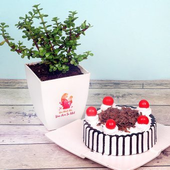 Jade Plant with Blackforest Cake Combo for Mom