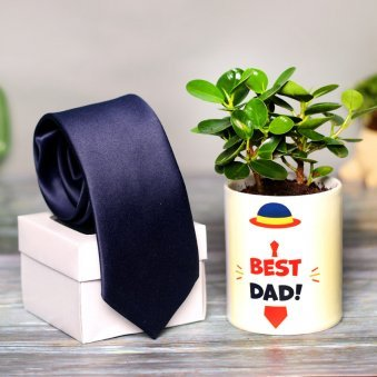 Ficus Compacta Plant and Tie Combo