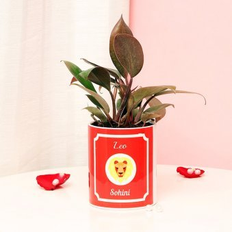 Personalised Red Philodendron Plant for Leo People