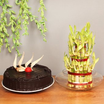 3 Layer Lucky Bamboo with Chocolate Cake Combo