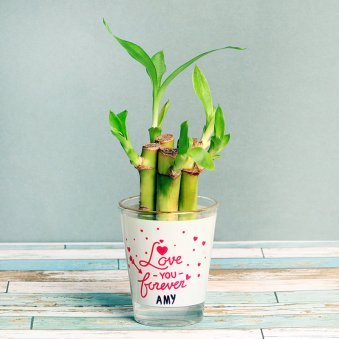 Bamboo Plant in Personalised Love Shot Glass