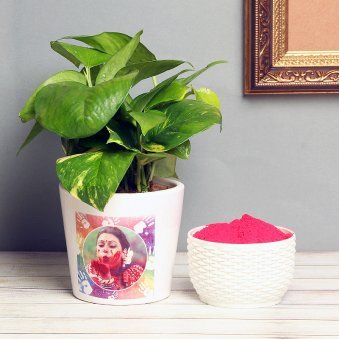 Personalised Money Plant for holi