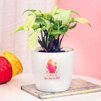 Syngonium Plant in a Vase for Mom
