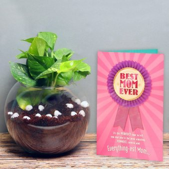 Mesmerising Money Plant With Greeting Card - A Gift For Mom